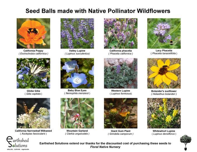 Native Pollinator Seed Balls