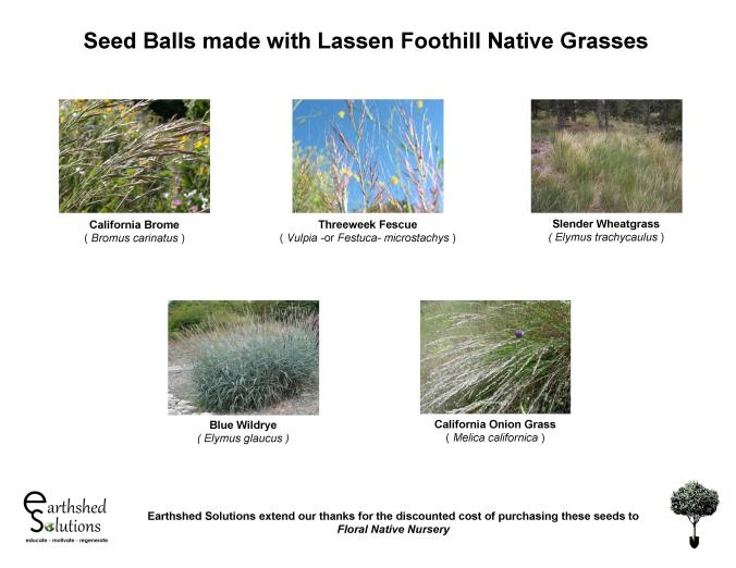Native Grass Seed Balls