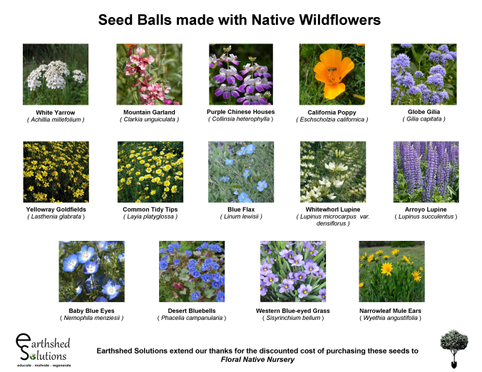 Native Wildflowers for Seed Balls 2018