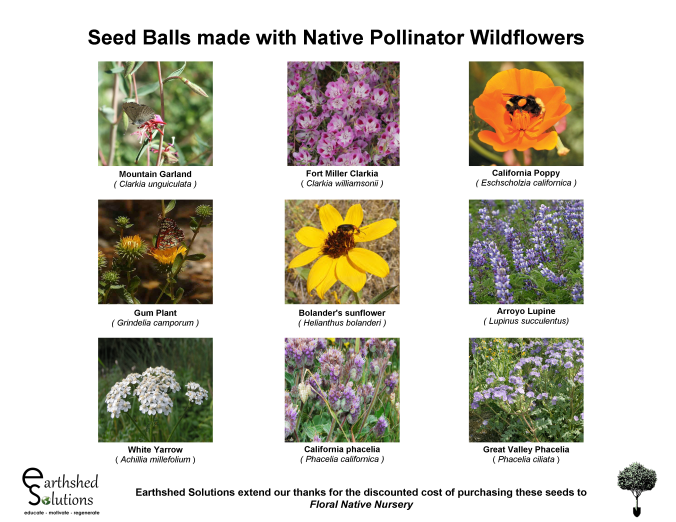 Pollinator Wildflowers for Seed Balls 2018