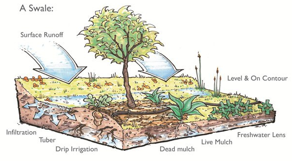 How a swale works
